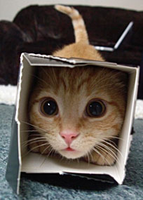 Scared cat in box