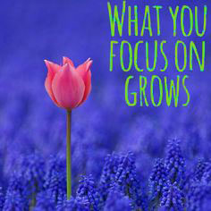 what-you-focus-on-grows